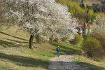 Spring_in _Transylvania_Carpathian_Dreams-60