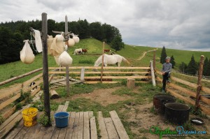 at-the-sheepfold
