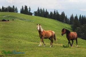 horses-roaming-freely