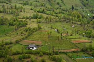 spring-in-the-village