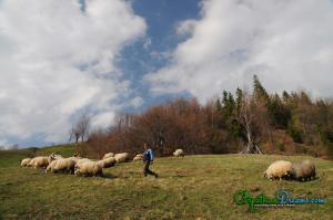 Enduro MTB Tour CarpathianDreams-55
