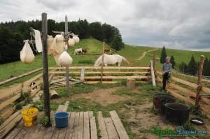 at-the-sheepfold