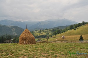hay-stack
