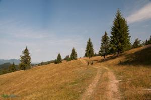 CarpathianDreams_mtb_Transylvania-0322
