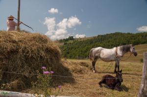 CarpathianDreams_mtb_Transylvania-0388