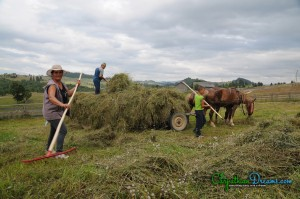 14.Hay stacking