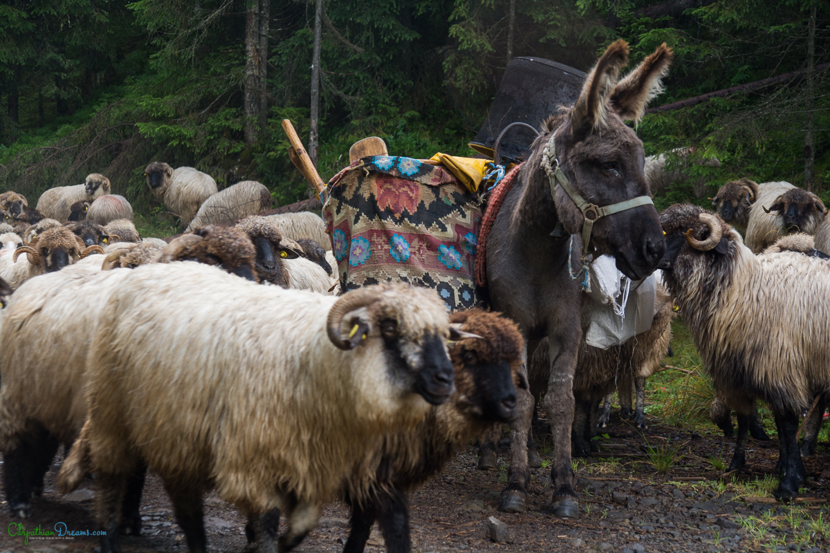 imperial road and the last transhumance