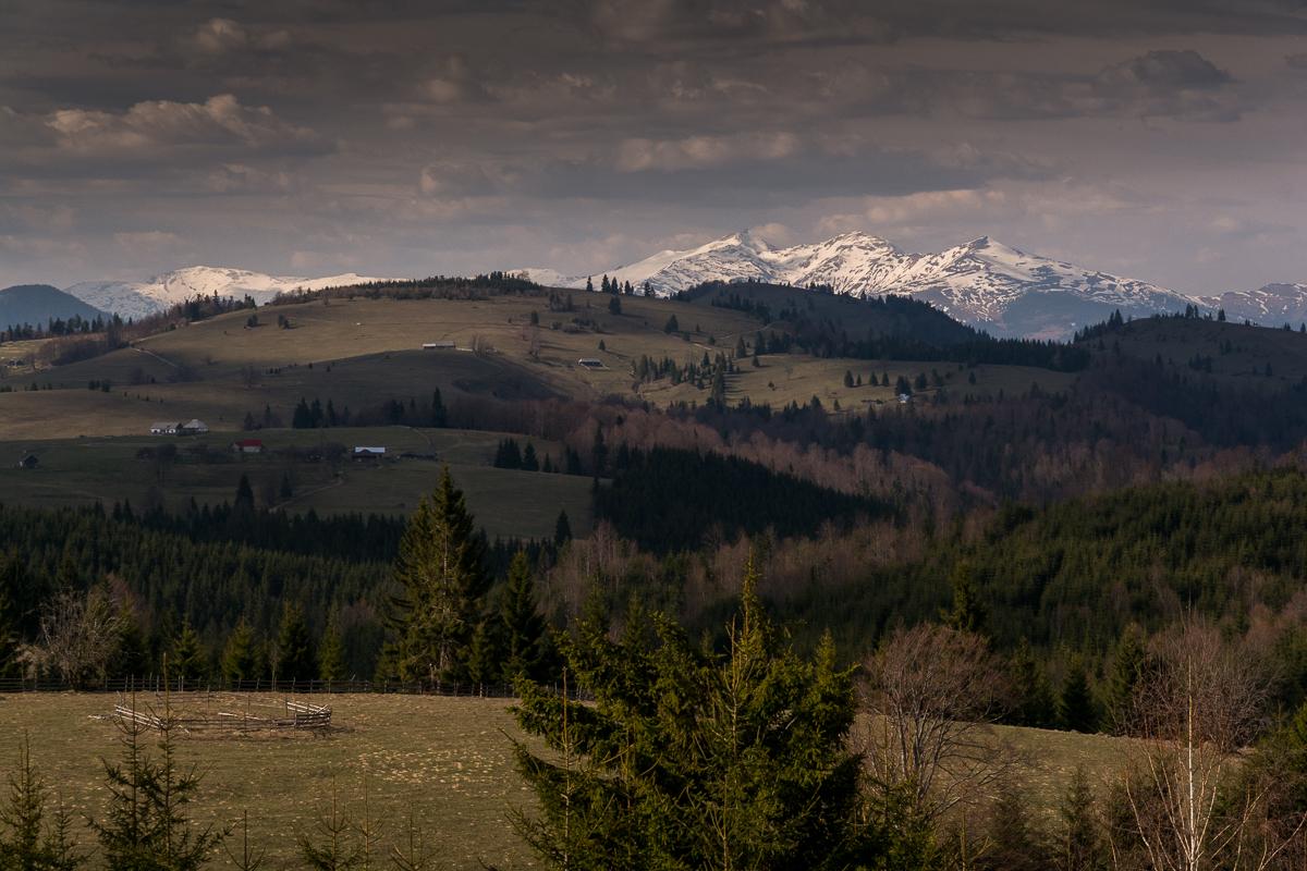 Spring like landscape in the Carpathians